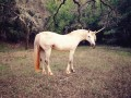 unicornio_startup